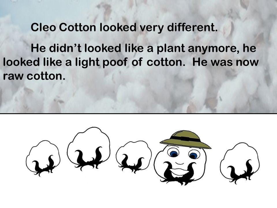 Spun Cotton Yarn