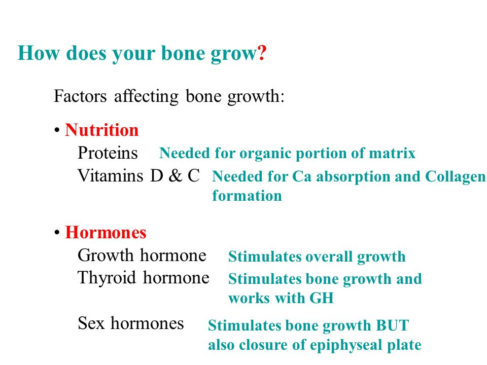 Factors affecting bone growth: Nutrition Proteins Vitamins D & C Hormones Growth hormone Thyroid hormone Sex hormones Needed for organic portion of matrix Needed for Ca absorption and Collagen formation Stimulates overall growth Stimulates bone growth and works with GH Stimulates bone growth BUT also closure of epiphyseal plate How does your bone grow