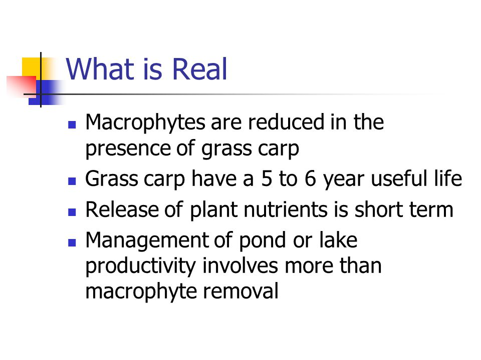 What is Real Macrophytes are reduced in the presence of grass carp Grass carp have a 5 to 6 year useful life Release of plant nutrients is short term