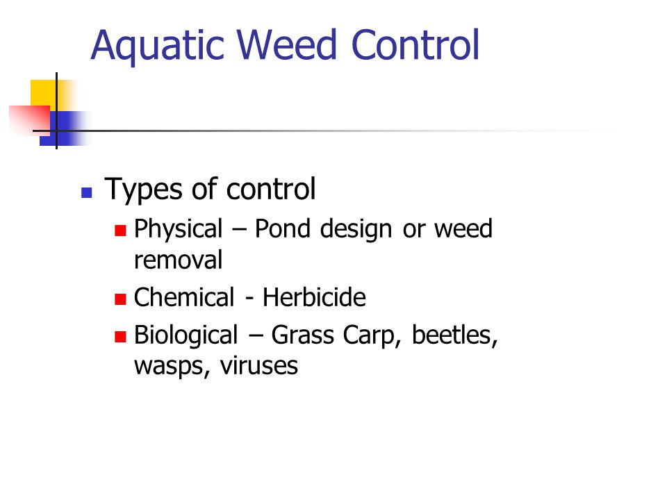 Aquatic Weed Control Types of control Physical – Pond design or weed removal Chemical - Herbicide Biological – Grass Carp, beetles, wasps, viruses