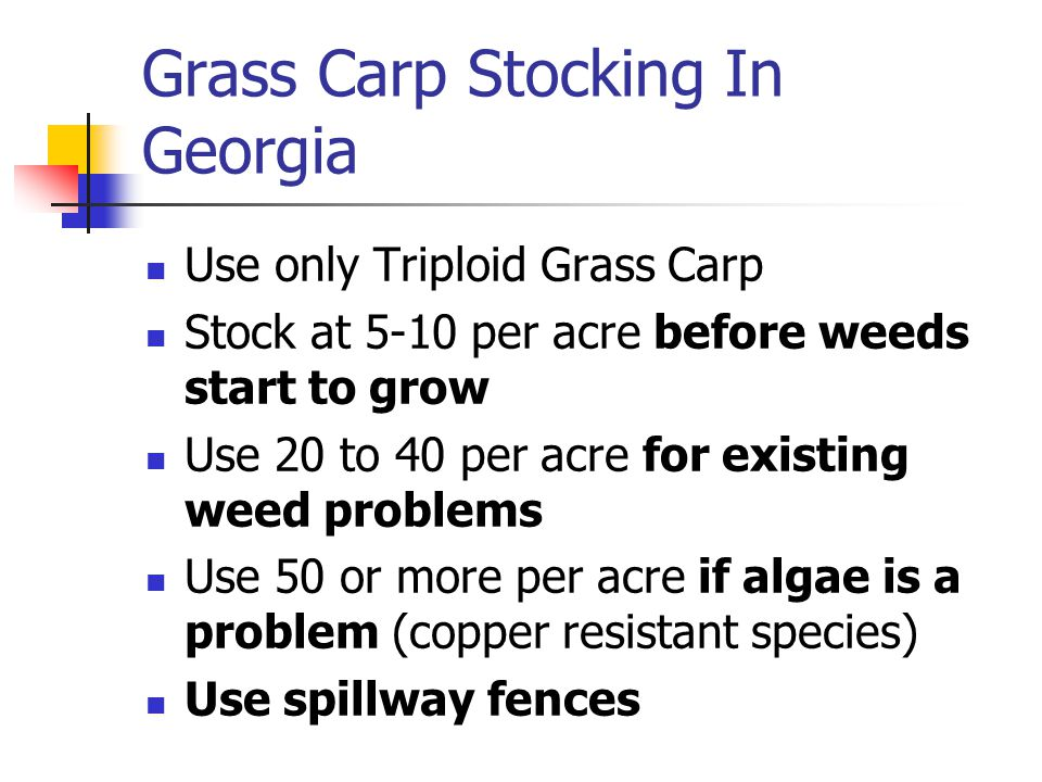 Grass Carp Stocking In Georgia Use only Triploid Grass Carp Stock at 5-10 per acre before weeds start to grow Use 20 to 40 per acre for existing weed