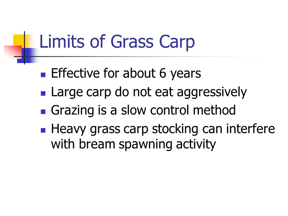 Limits of Grass Carp Effective for about 6 years Large carp do not eat aggressively Grazing is a slow control method Heavy grass carp stocking can int
