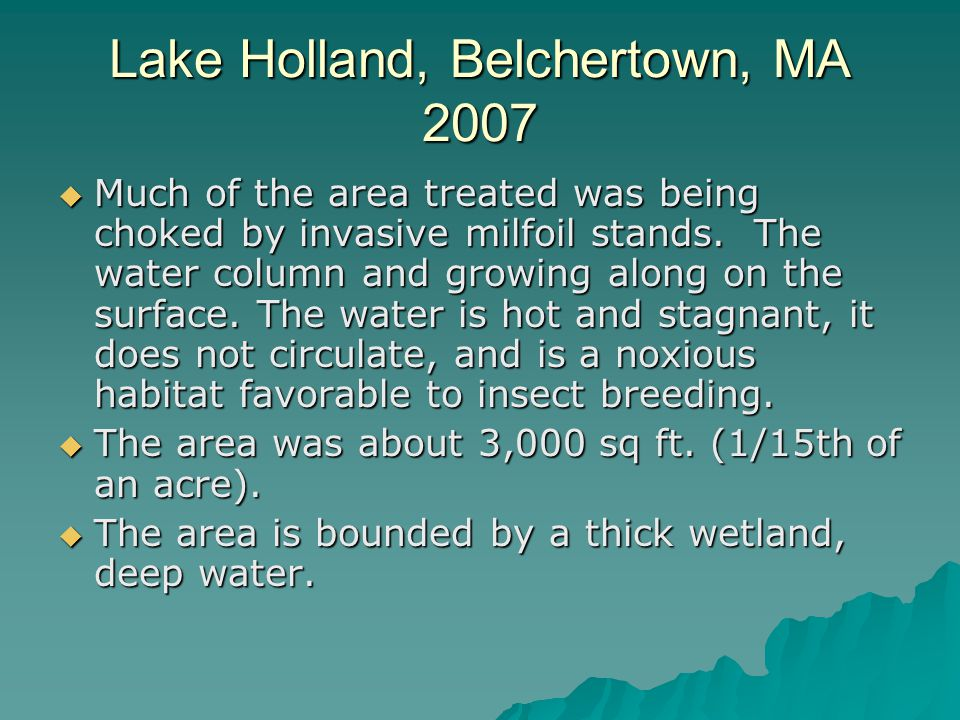 Lake Holland, Belchertown, MA 2007  Much of the area treated was being choked by invasive milfoil stands.