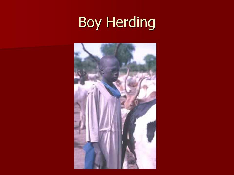 Boy Herding