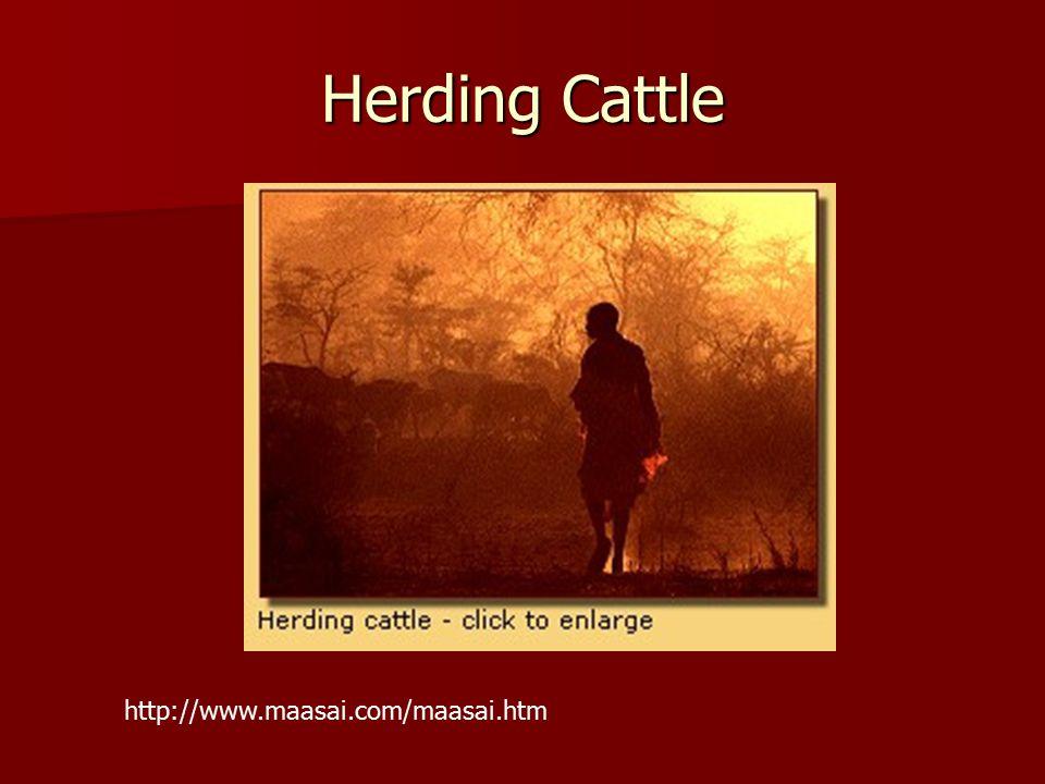 Herding Cattle http://www.maasai.com/maasai.htm