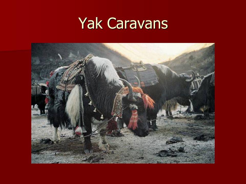 Yak Caravans