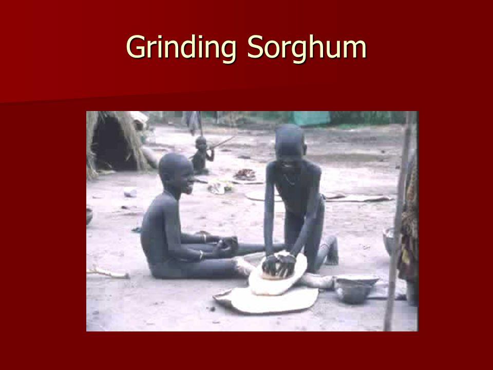 Grinding Sorghum