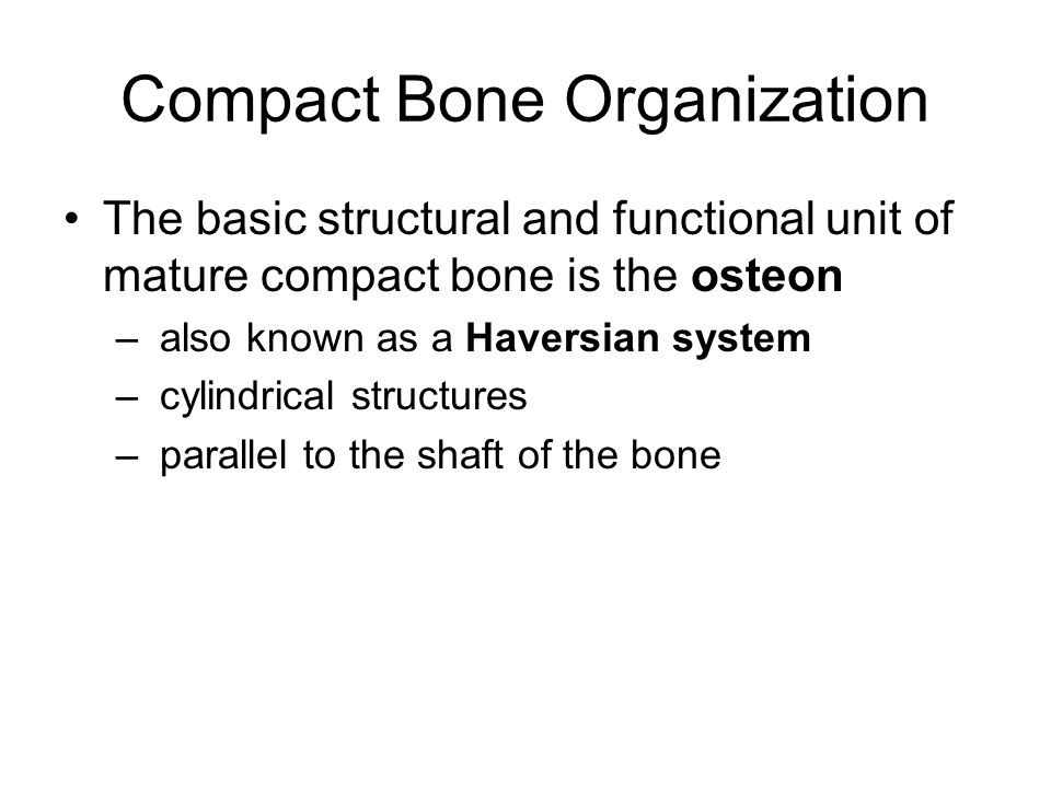 Compact Bone Organization The basic structural and functional unit of mature compact bone is the osteon – also known as a Haversian system – cylindric