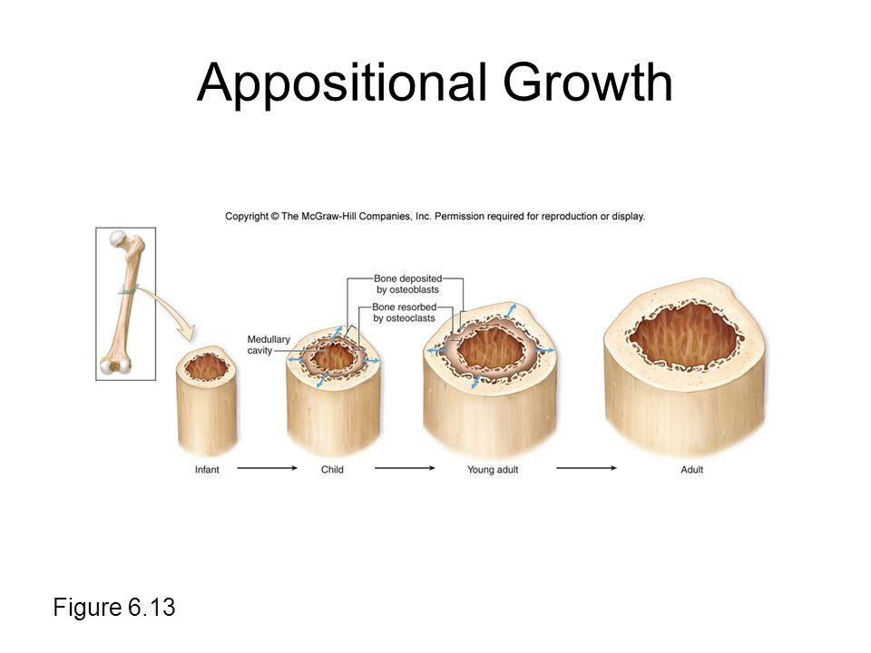 Appositional Growth Figure 6.13