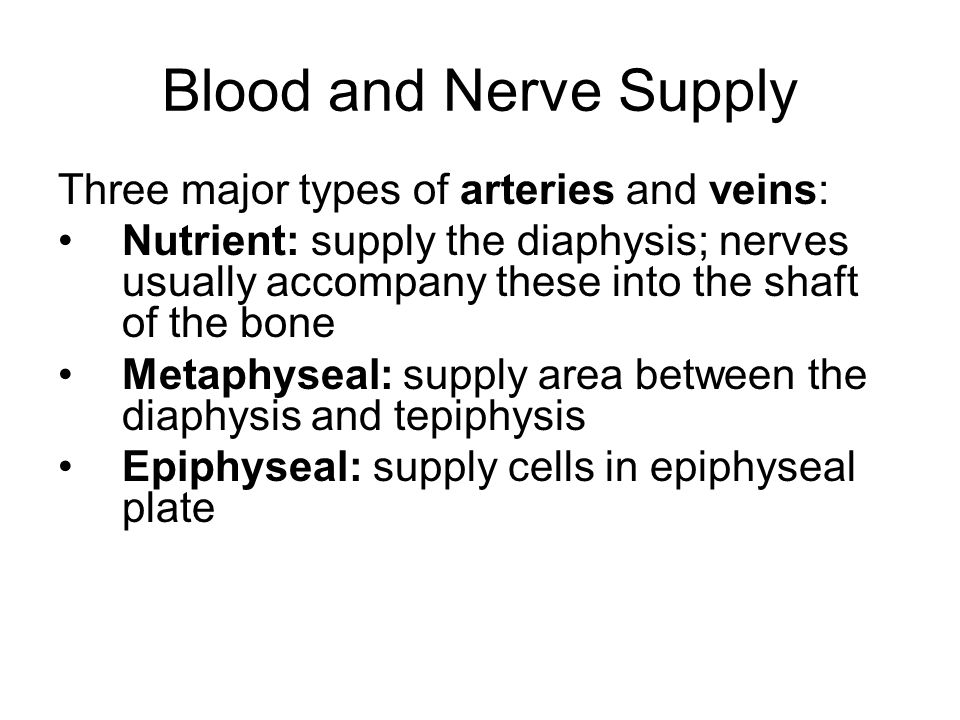 Blood and Nerve Supply Three major types of arteries and veins: Nutrient: supply the diaphysis; nerves usually accompany these into the shaft of the b