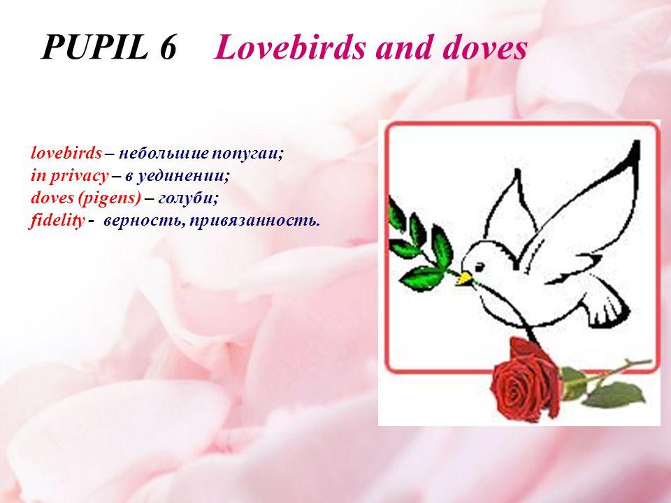 lovebirds – небольшие попугаи; in privacy – в уединении; doves (pigens) – голуби; fidelity - верность, привязанность.