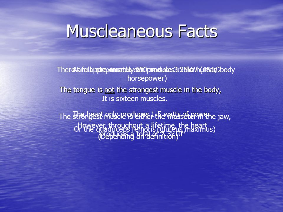 Muscleaneous Facts The tongue is not the strongest muscle in the body, There are approximately 650 muscles in the human body It is sixteen muscles.