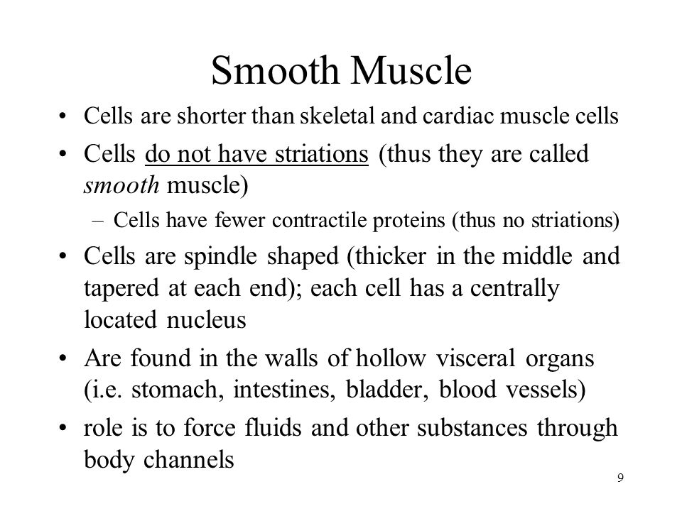 9 Smooth Muscle Cells are shorter than skeletal and cardiac muscle cells Cells do not have striations (thus they are called smooth muscle) –Cells have