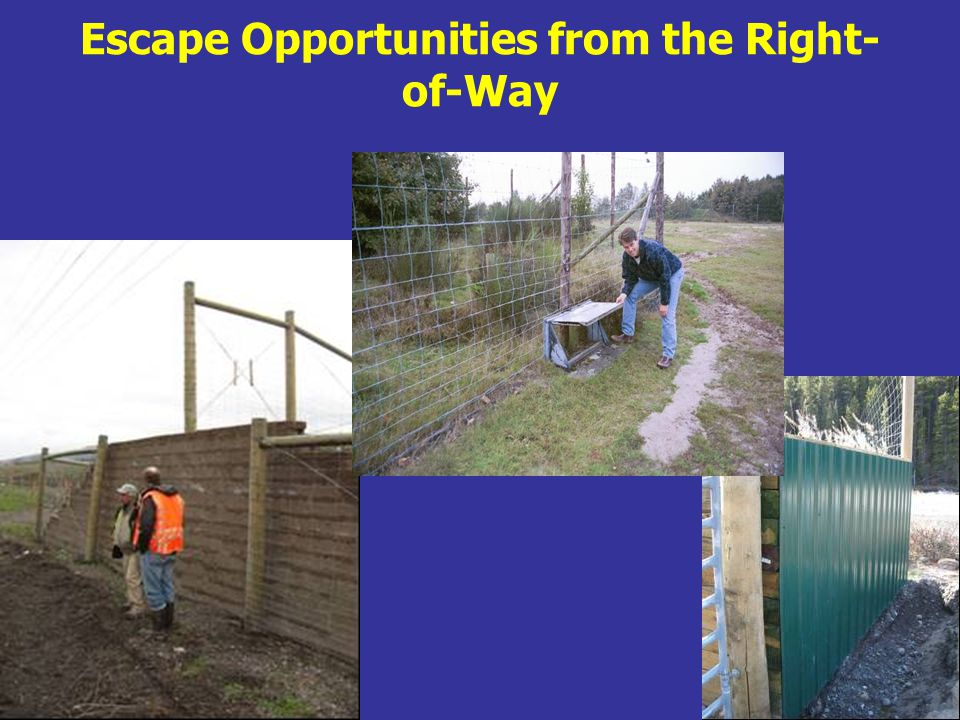 Escape Opportunities from the Right- of-Way