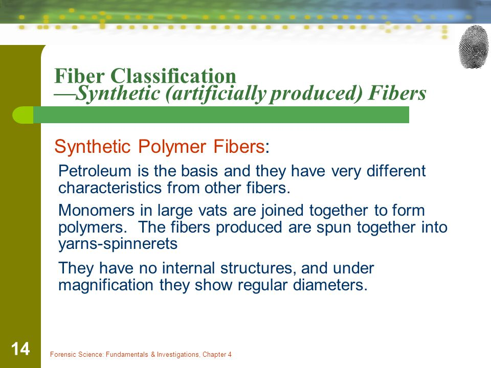 Forensic Science: Fundamentals & Investigations, Chapter 4 14 Fiber Classification —Synthetic (artificially produced) Fibers Synthetic Polymer Fibers: Petroleum is the basis and they have very different characteristics from other fibers.