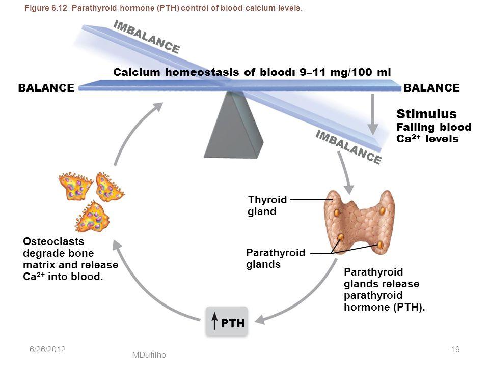 MDufilho Figure 6.12 Parathyroid hormone (PTH) control of blood calcium levels. Calcium homeostasis of blood: 9–11 mg/100 ml BALANCE Stimulus Falling
