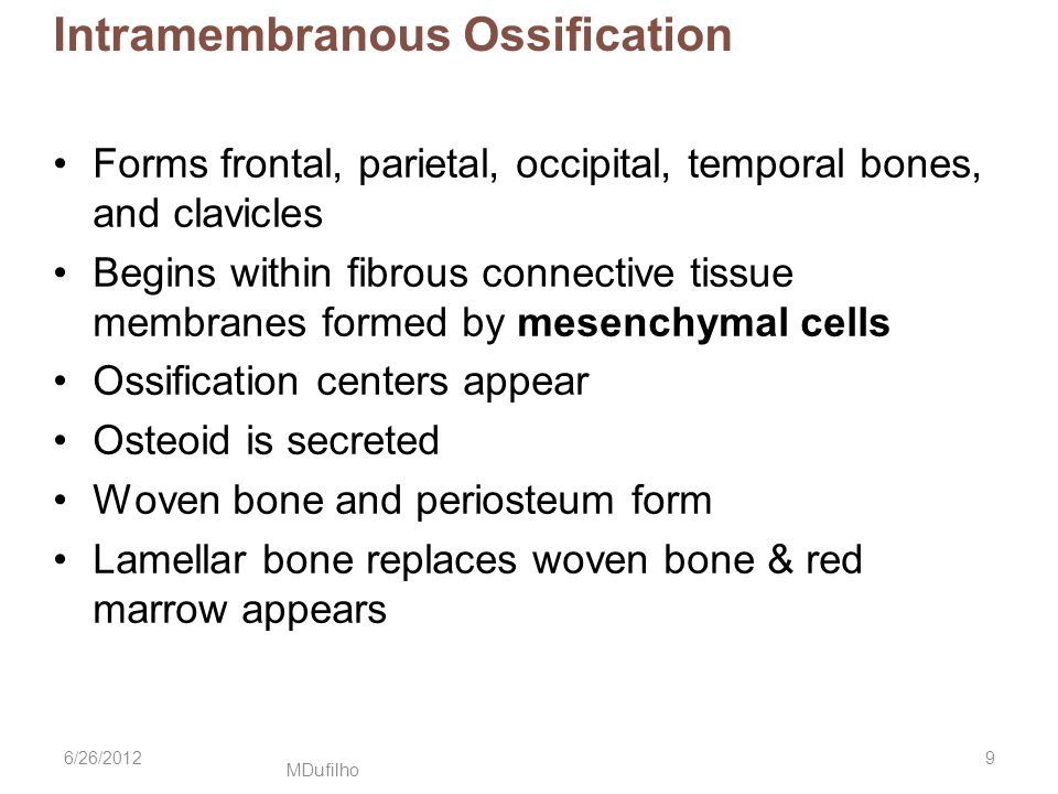 MDufilho Intramembranous Ossification Forms frontal, parietal, occipital, temporal bones, and clavicles Begins within fibrous connective tissue membranes formed by mesenchymal cells Ossification centers appear Osteoid is secreted Woven bone and periosteum form Lamellar bone replaces woven bone & red marrow appears 6/26/20129