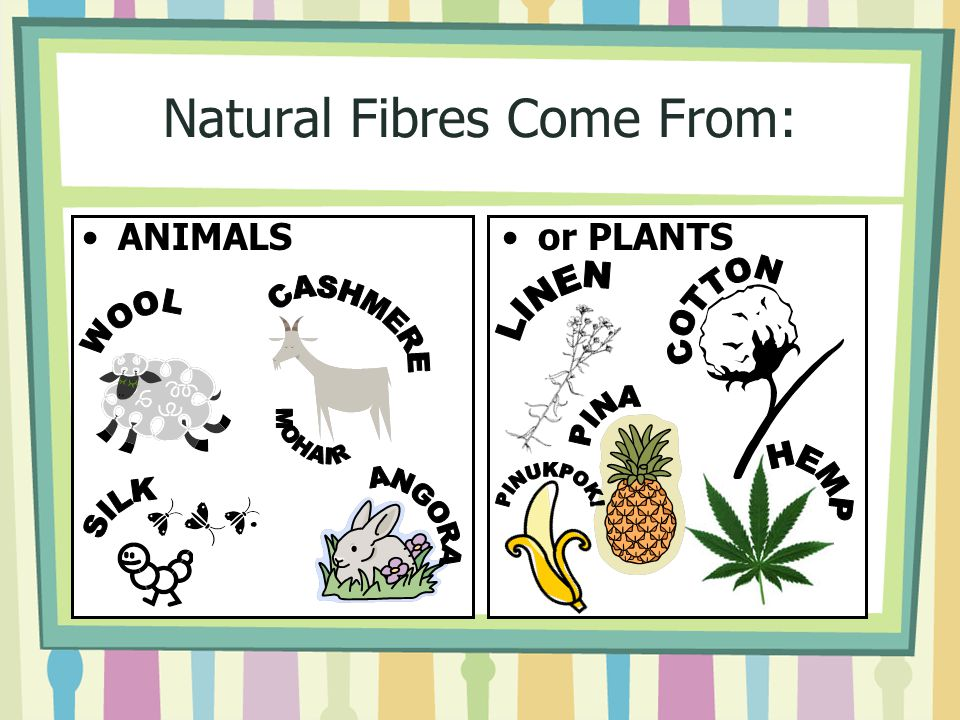 Natural Fibres Come From: ANIMALSor PLANTS