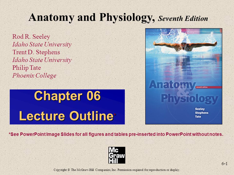 6-1 Anatomy and Physiology, Seventh Edition Rod R. Seeley Idaho State University Trent D. Stephens Idaho State University Philip Tate Phoenix College