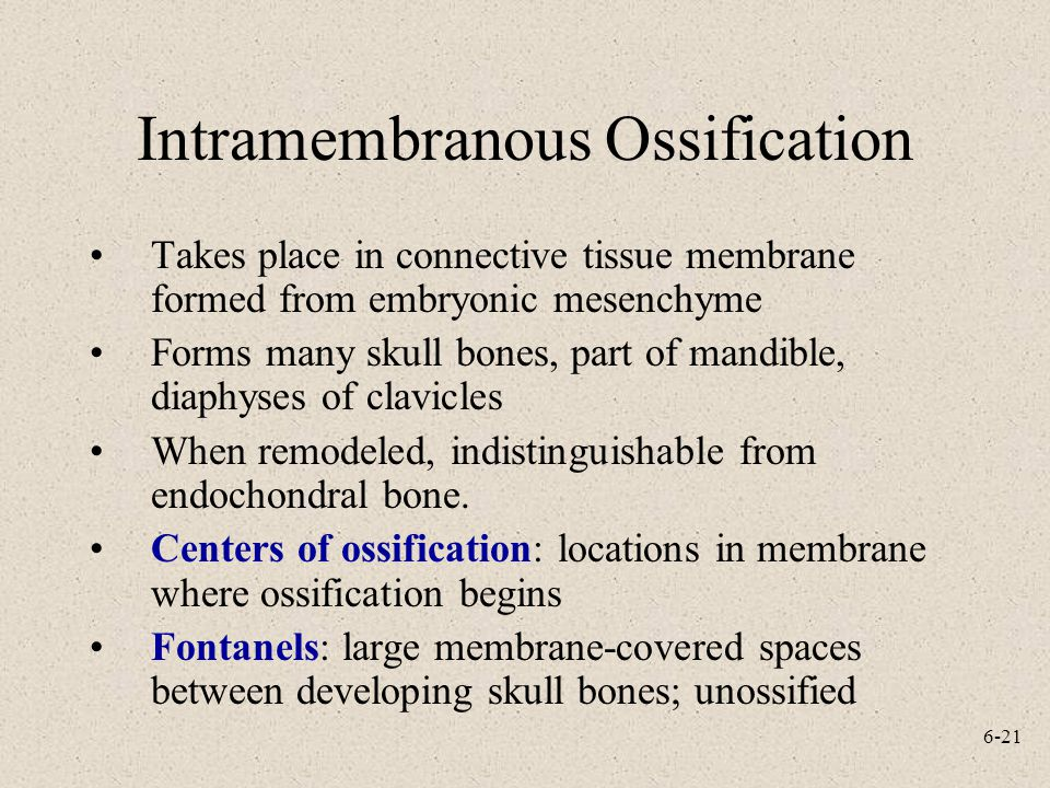 6-21 Intramembranous Ossification Takes place in connective tissue membrane formed from embryonic mesenchyme Forms many skull bones, part of mandible, diaphyses of clavicles When remodeled, indistinguishable from endochondral bone.