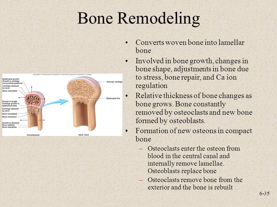 6-35 Bone Remodeling Converts woven bone into lamellar bone Involved in bone growth, changes in bone shape, adjustments in bone due to stress, bone re