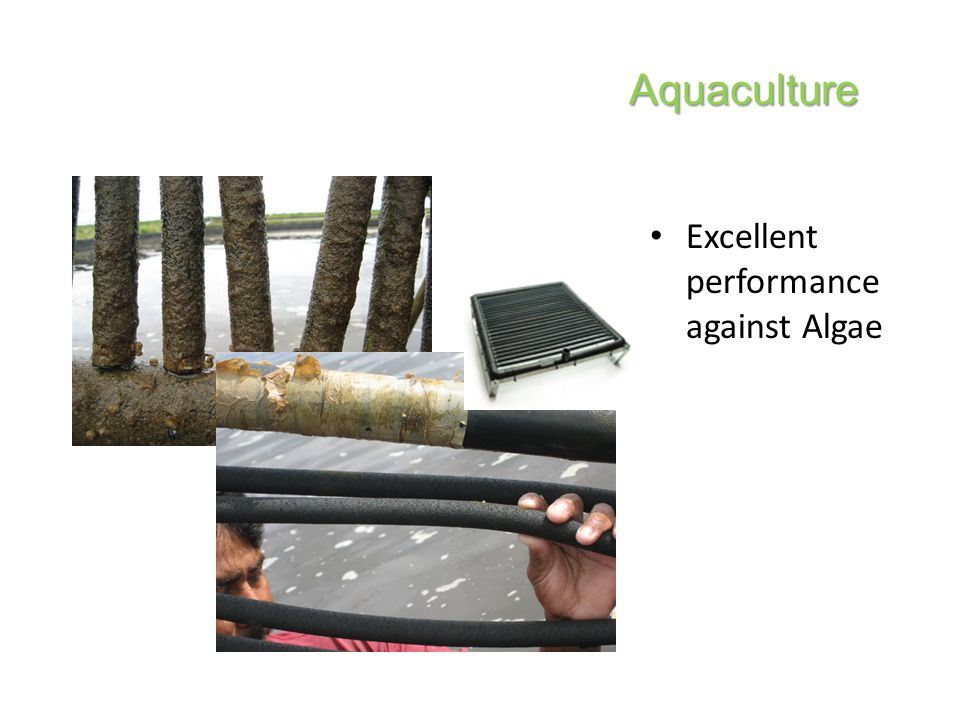 Excellent performance against Algae Aquaculture