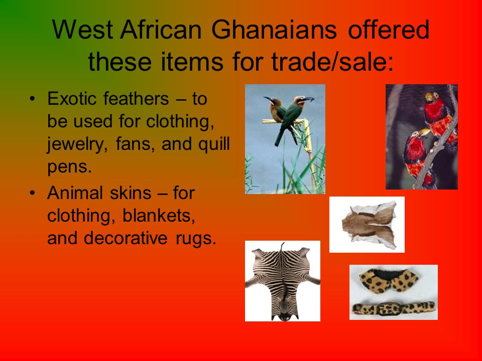 West African Ghanaians offered these items for trade/sale: Exotic feathers – to be used for clothing, jewelry, fans, and quill pens.