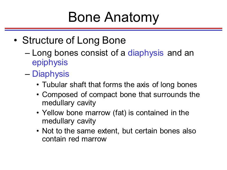 Bone Anatomy Structure of Long Bone –Epiphyses Expanded ends of long bones Exterior is compact bone, and the interior is spongy bone Joint surface is covered with articular (hyaline) cartilage Epiphyseal line separates the diaphysis from the epiphyses Epiphyseal plate is the site of bone growth in length