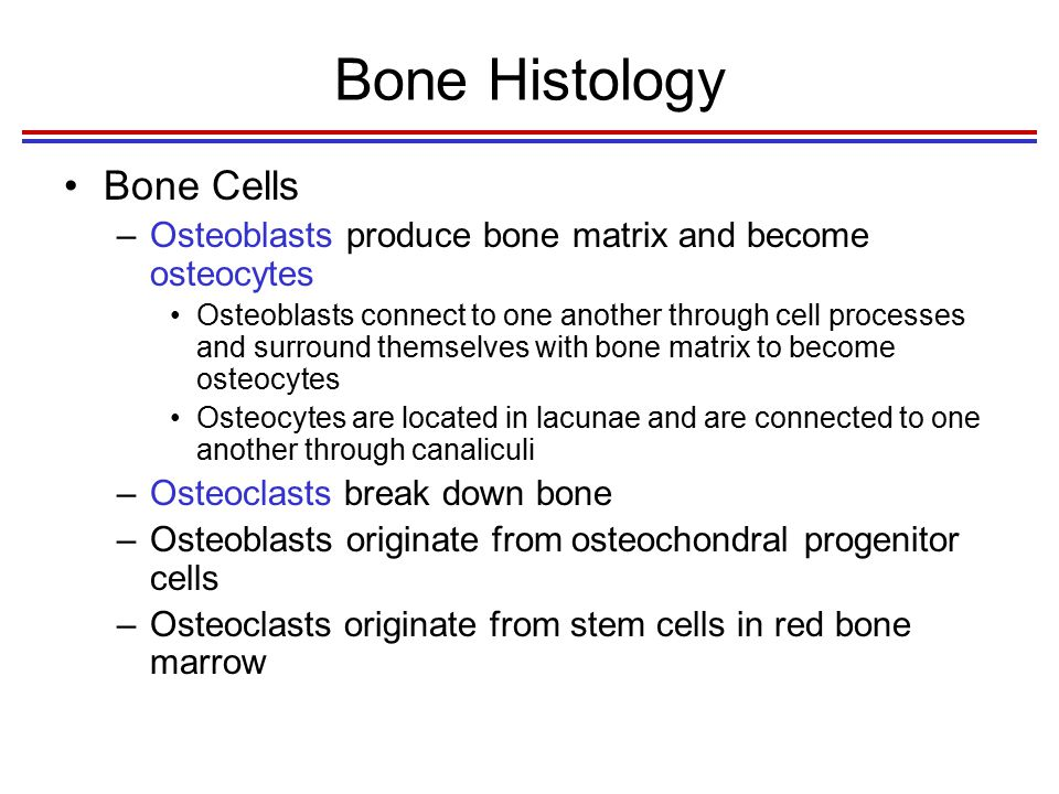 Bone Histology Ossification (Osteogenesis) 1.Osteoblasts on a preexisting surface, such as cartilage or bone.