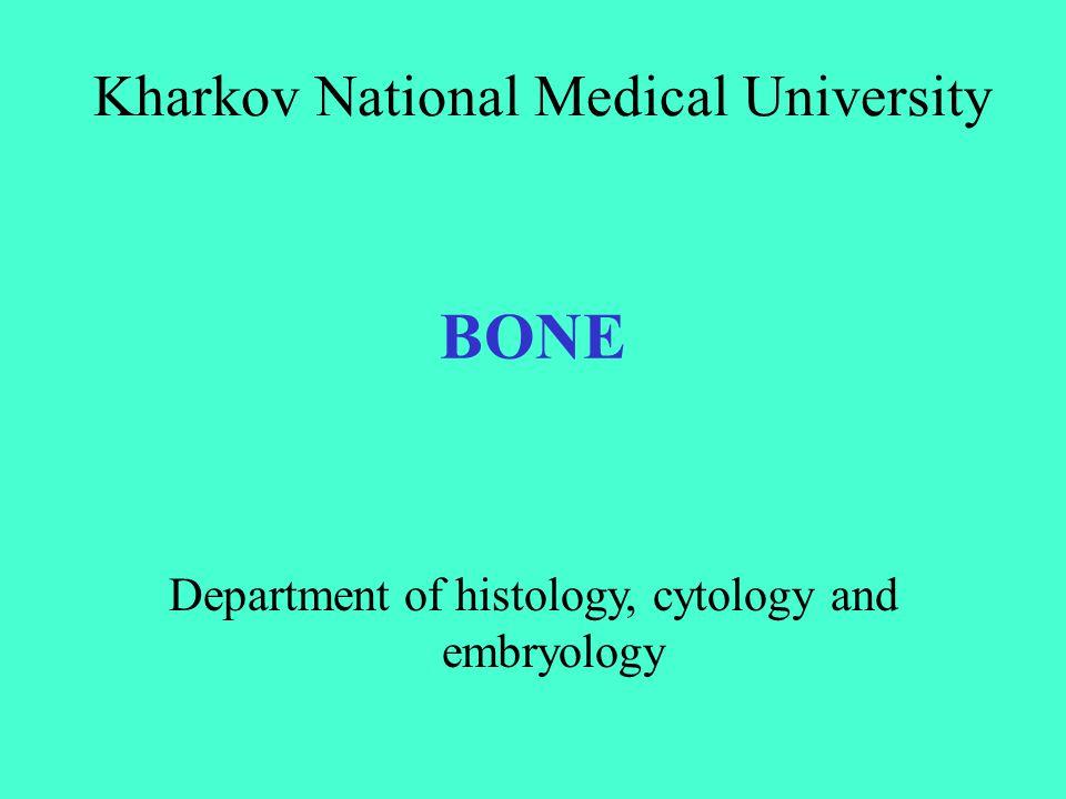 BONE Kharkov National Medical University Department of histology, cytology and embryology