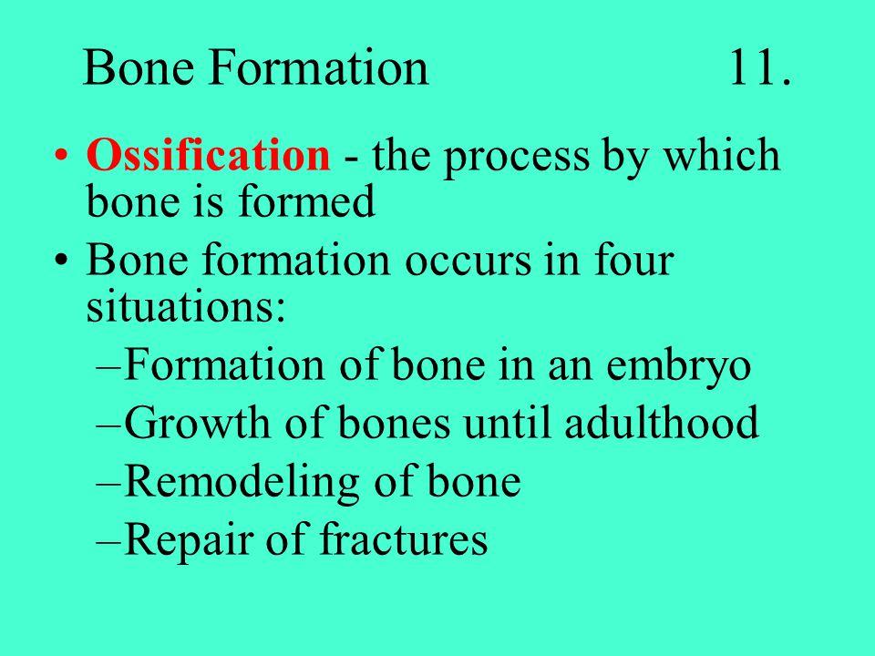 Bone Formation 11.