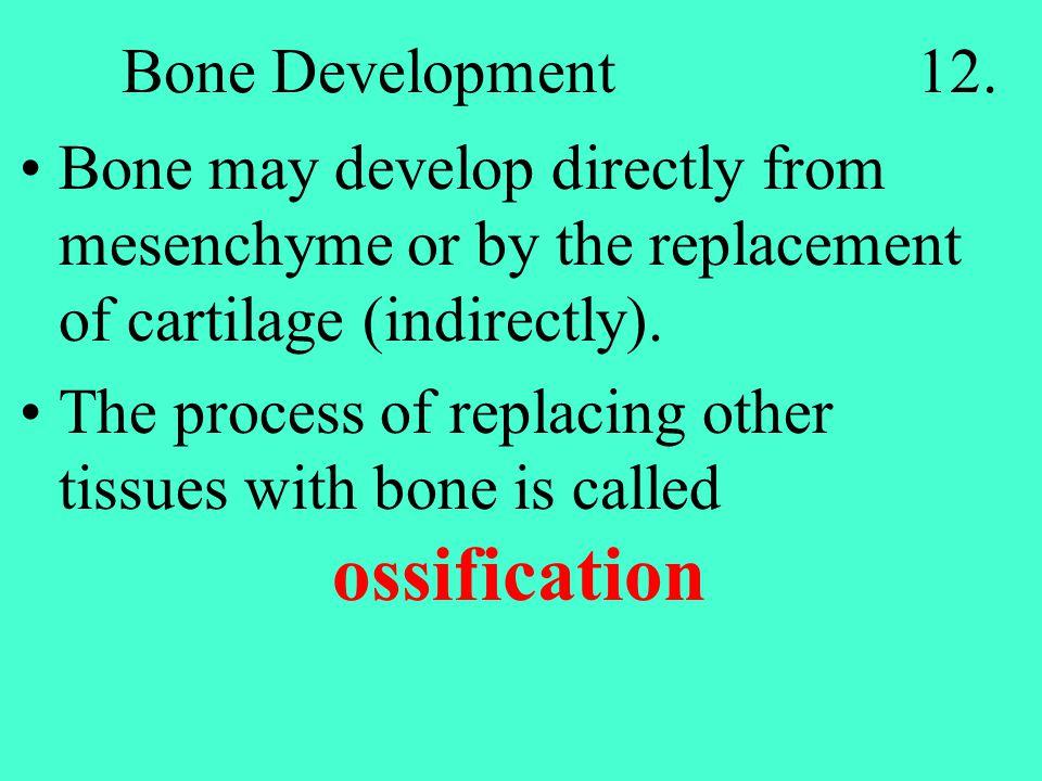 Bone Development 12.