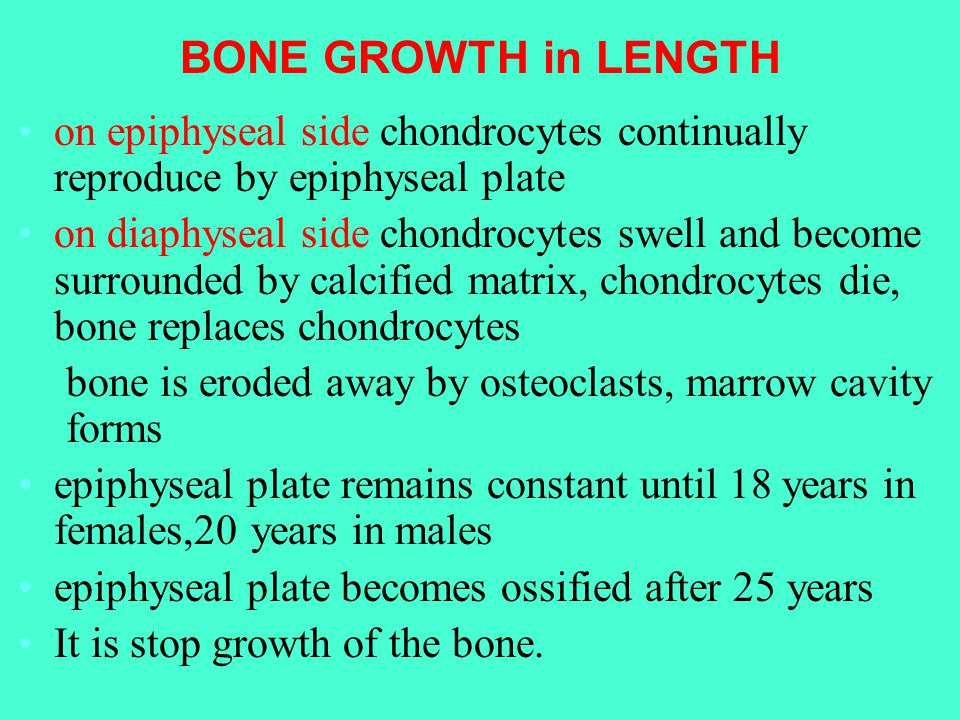 BONE GROWTH in LENGTH on epiphyseal side chondrocytes continually reproduce by epiphyseal plate on diaphyseal side chondrocytes swell and become surrounded by calcified matrix, chondrocytes die, bone replaces chondrocytes bone is eroded away by osteoclasts, marrow cavity forms epiphyseal plate remains constant until 18 years in females,20 years in males epiphyseal plate becomes ossified after 25 years It is stop growth of the bone.