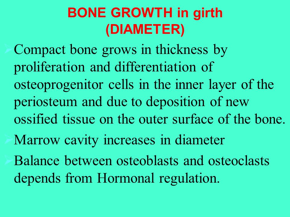 BONE GROWTH in girth (DIAMETER)  Compact bone grows in thickness by proliferation and differentiation of osteoprogenitor cells in the inner layer of the periosteum and due to deposition of new ossified tissue on the outer surface of the bone.