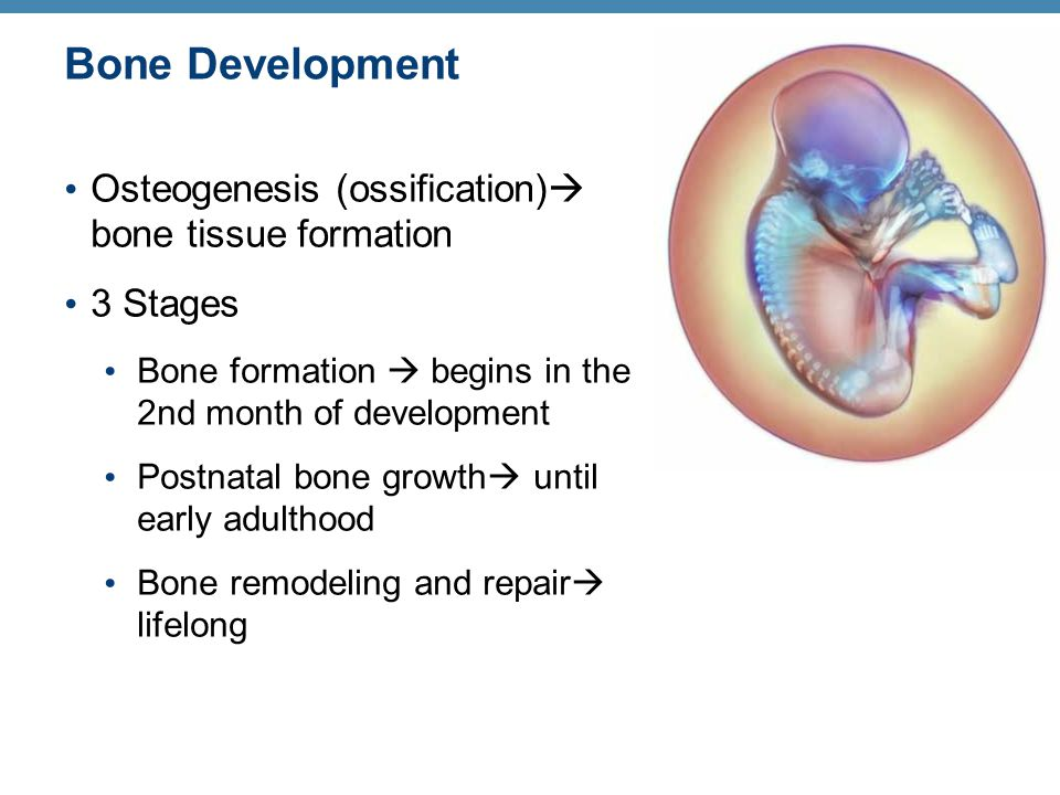 Classification of Bone Fractures 3.Orientation of the break to the long axis of the bone: Linear—parallel to long axis of the bone Transverse—perpendicular to long axis of the bone 4.Whether or not the bone ends penetrate the skin: Compound (open)—bone ends penetrate the skin Simple (closed)—bone ends do not penetrate the skin