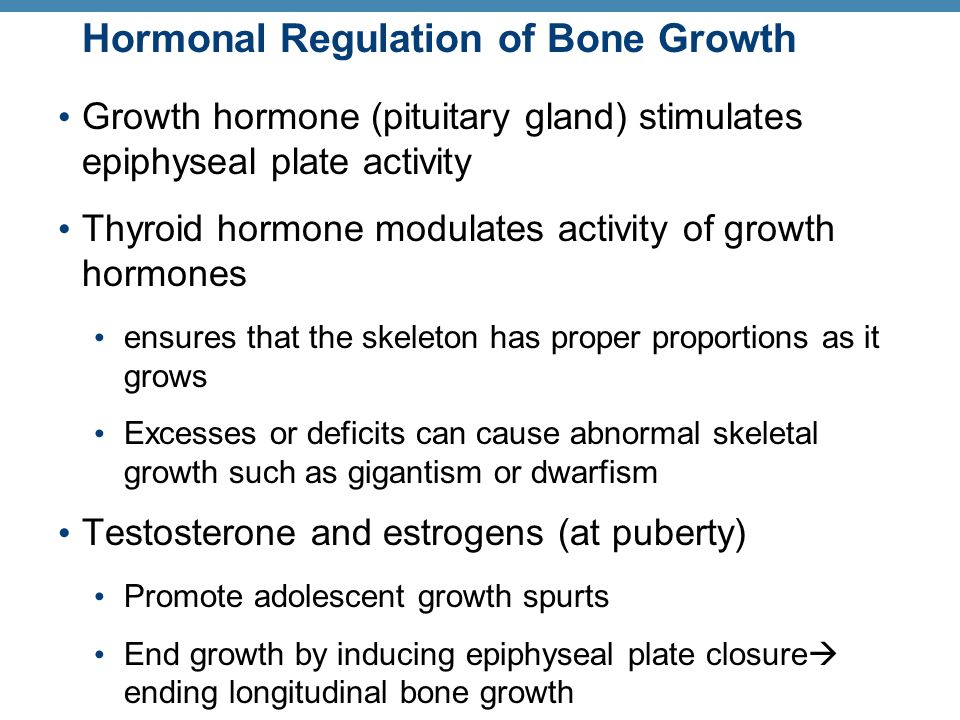 Hormonal Regulation of Bone Growth Growth hormone (pituitary gland) stimulates epiphyseal plate activity Thyroid hormone modulates activity of growth