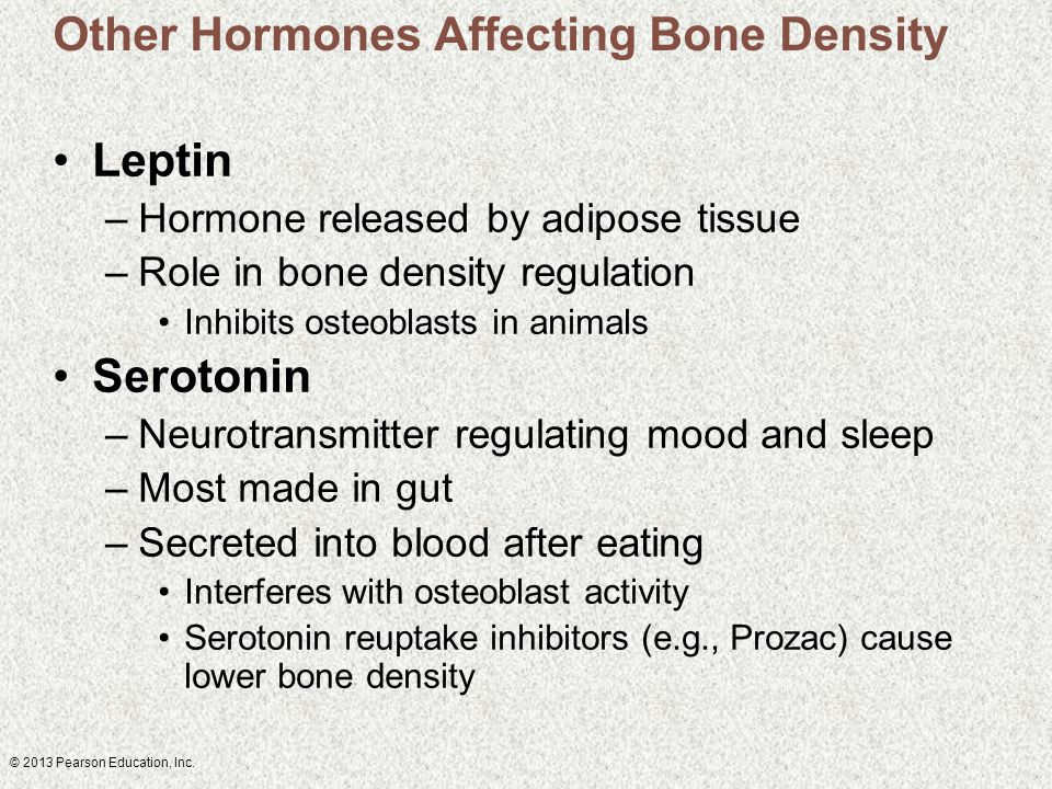 © 2013 Pearson Education, Inc. Other Hormones Affecting Bone Density Leptin –Hormone released by adipose tissue –Role in bone density regulation Inhib