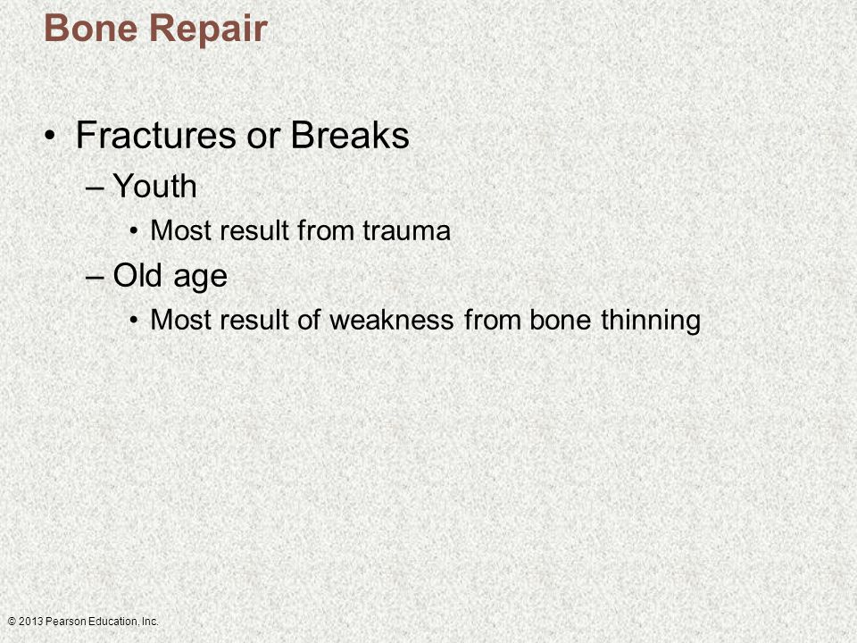 © 2013 Pearson Education, Inc. Bone Repair Fractures or Breaks –Youth Most result from trauma –Old age Most result of weakness from bone thinning