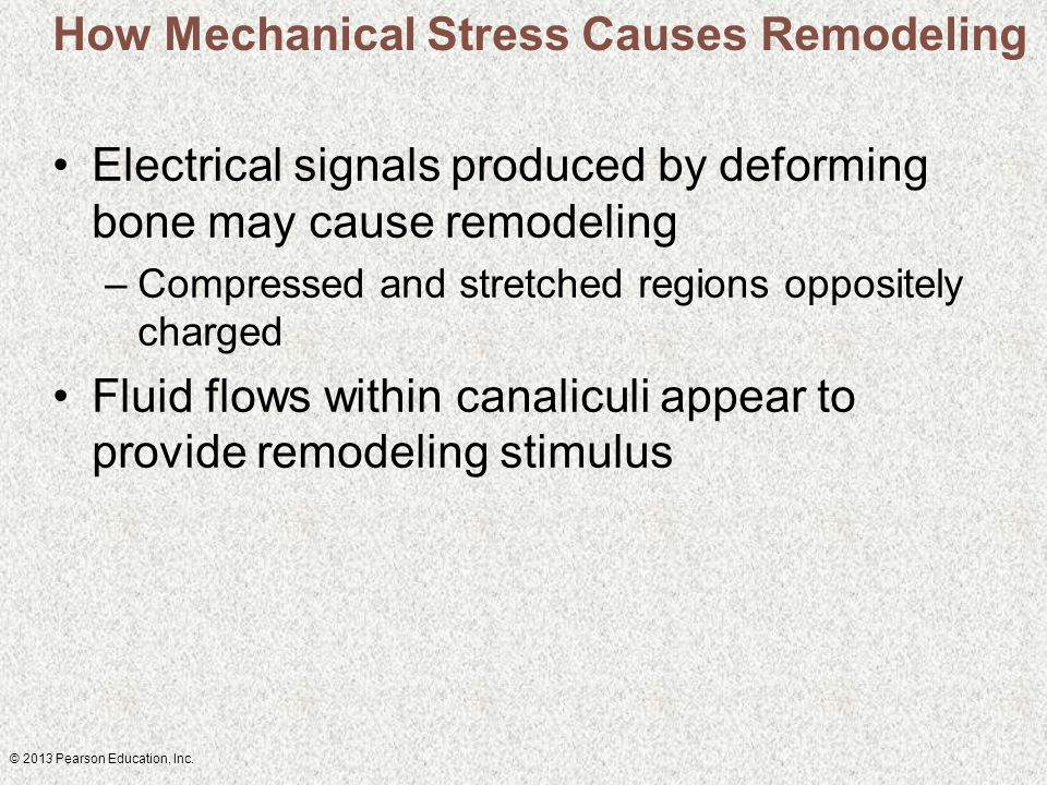 © 2013 Pearson Education, Inc. How Mechanical Stress Causes Remodeling Electrical signals produced by deforming bone may cause remodeling –Compressed