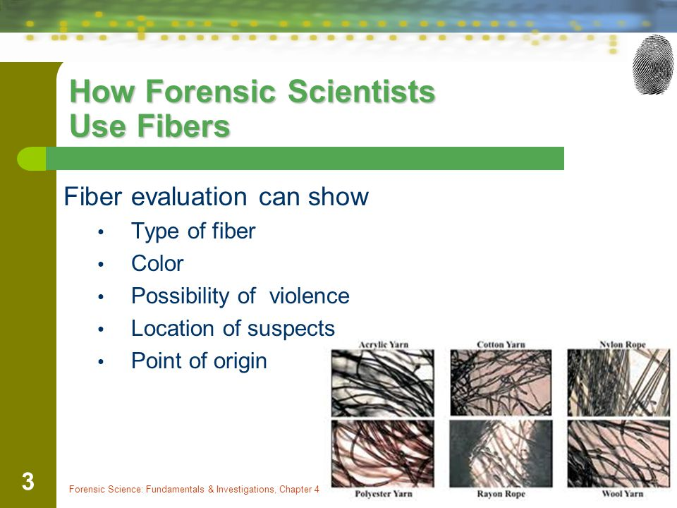 Forensic Science: Fundamentals & Investigations, Chapter 4 3 How Forensic Scientists Use Fibers Fiber evaluation can show Type of fiber Color Possibil
