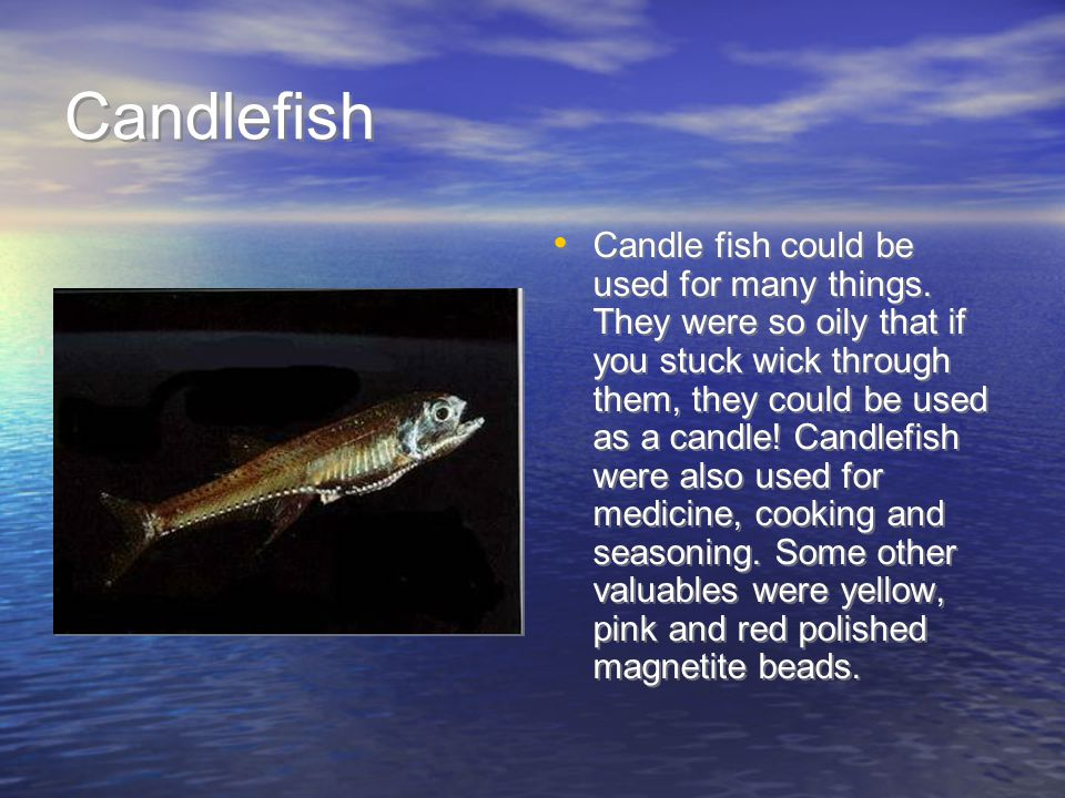 Candlefish Candle fish could be used for many things.
