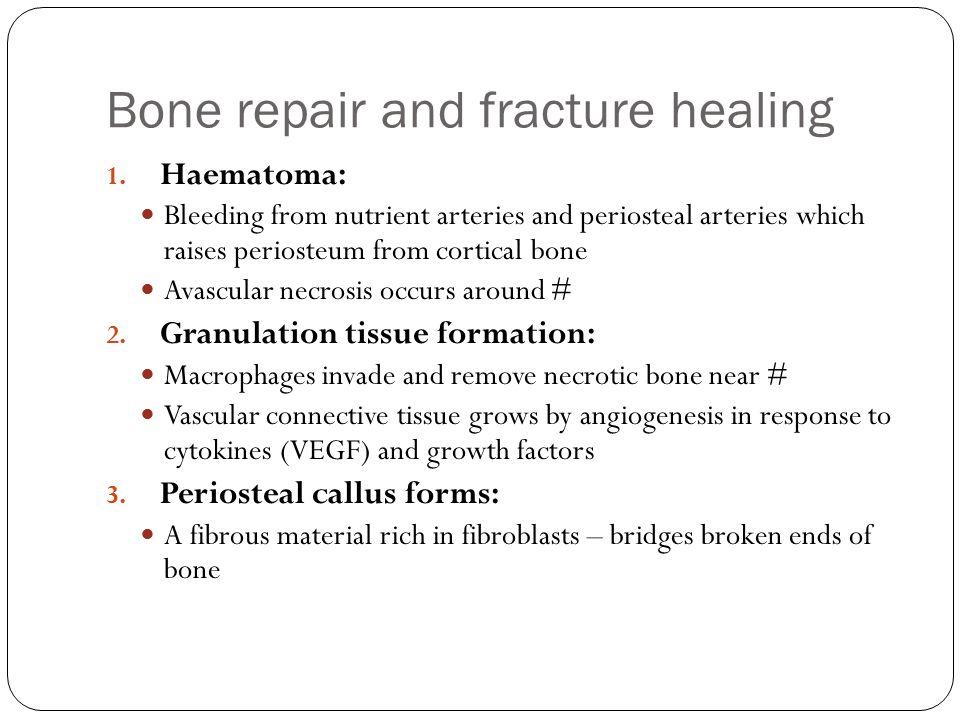 Bone repair and fracture healing 1.