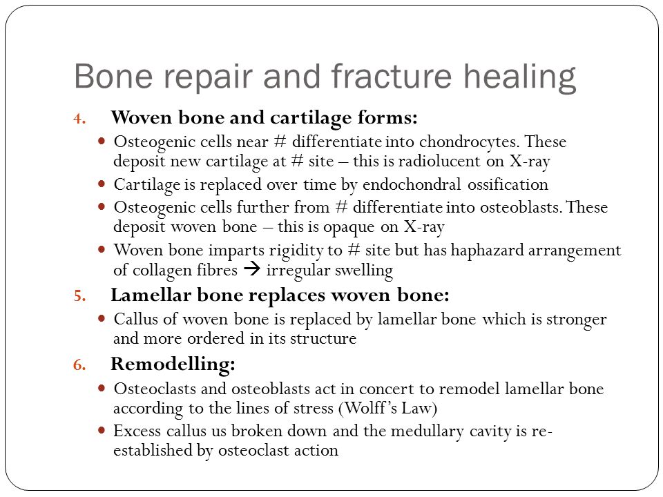 Bone repair and fracture healing 4. Woven bone and cartilage forms: Osteogenic cells near # differentiate into chondrocytes. These deposit new cartila
