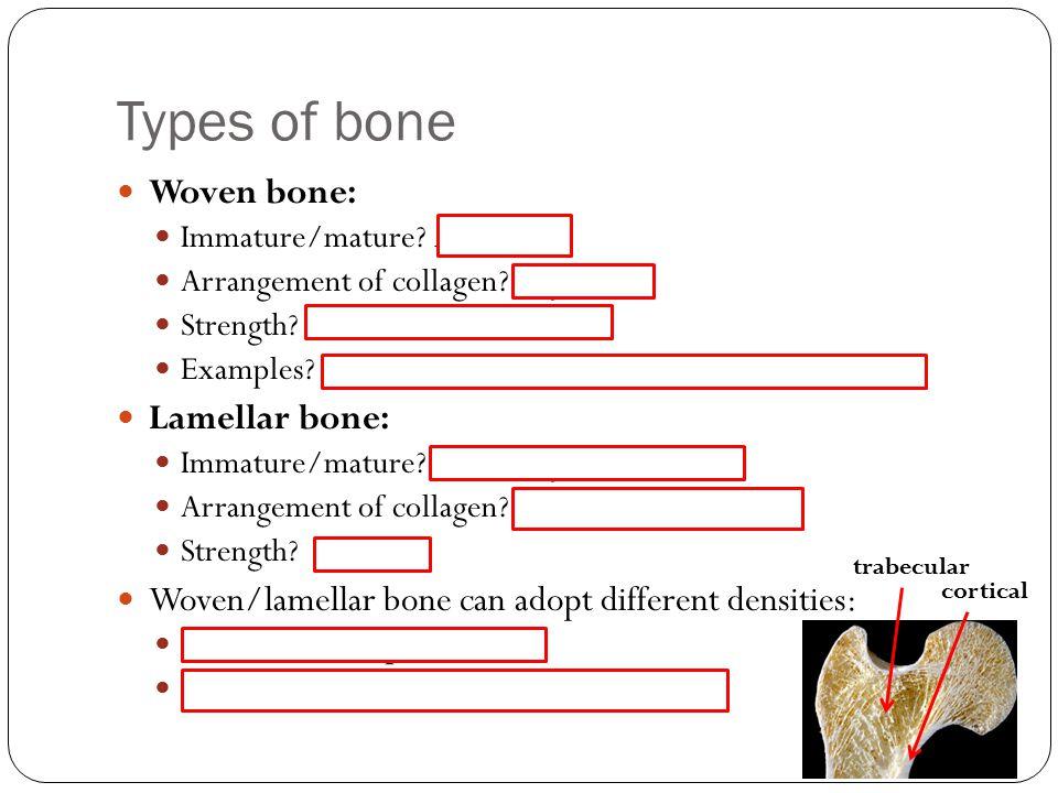 Types of bone Woven bone: Immature/mature.Immature Arrangement of collagen.