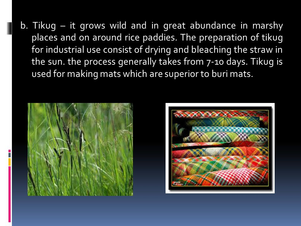 b. Tikug – it grows wild and in great abundance in marshy places and on around rice paddies. The preparation of tikug for industrial use consist of dr