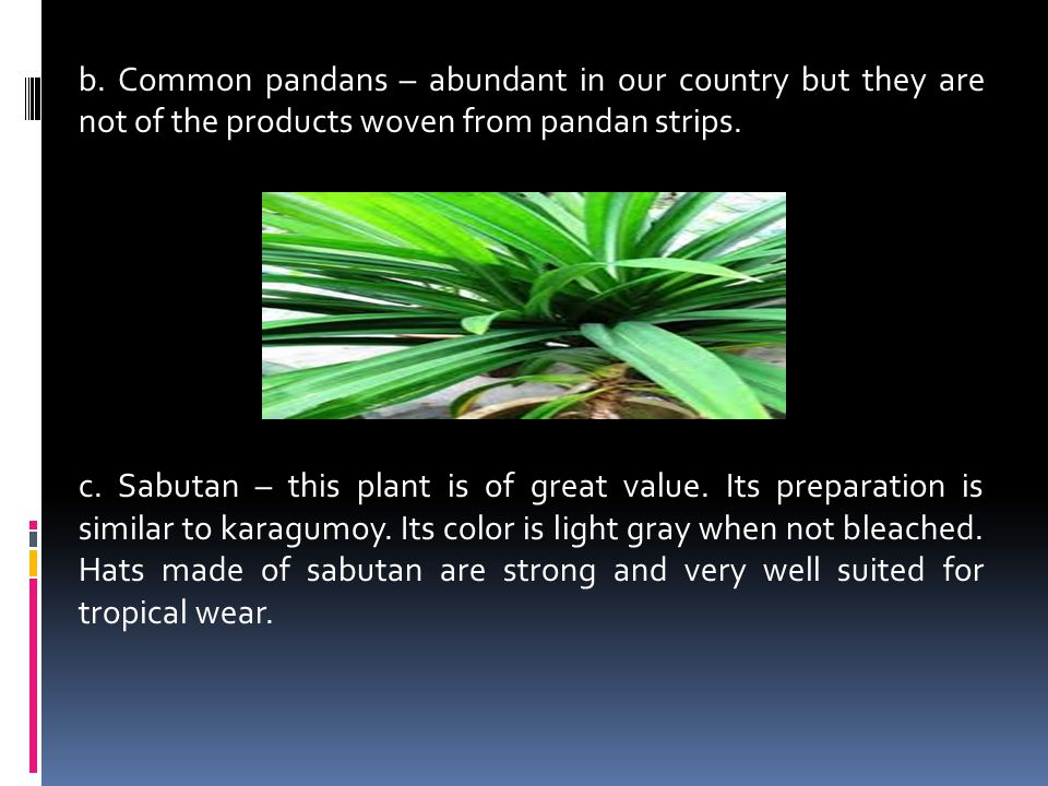 b. Common pandans – abundant in our country but they are not of the products woven from pandan strips. c. Sabutan – this plant is of great value. Its