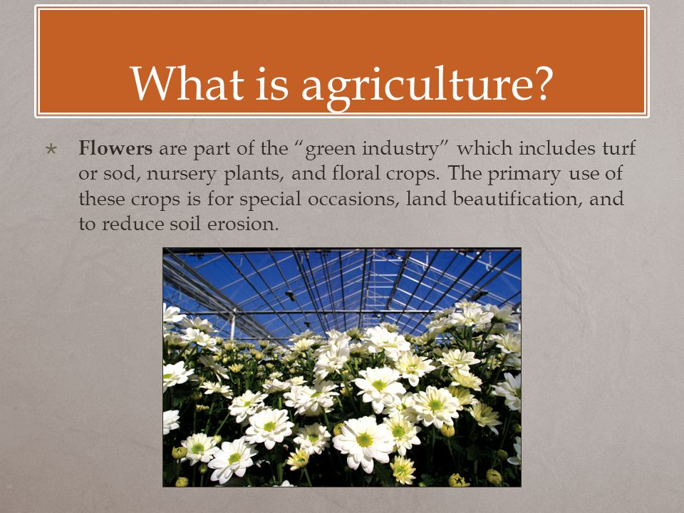 "What is agriculture?  Flowers are part of the ""green industry"" which includes turf or sod, nursery plants, and floral crops. The primary use of these"