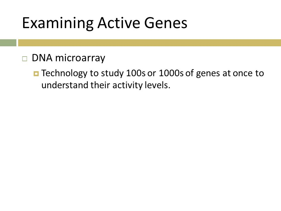 Examining Active Genes  DNA microarray  Technology to study 100s or 1000s of genes at once to understand their activity levels.