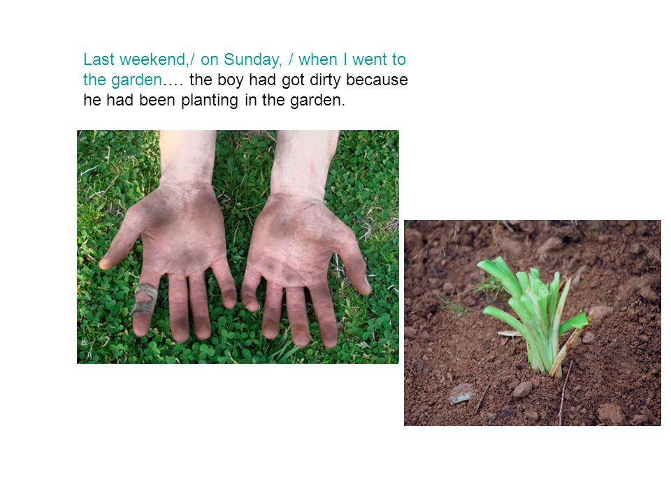Last weekend,/ on Sunday, / when I went to the garden….