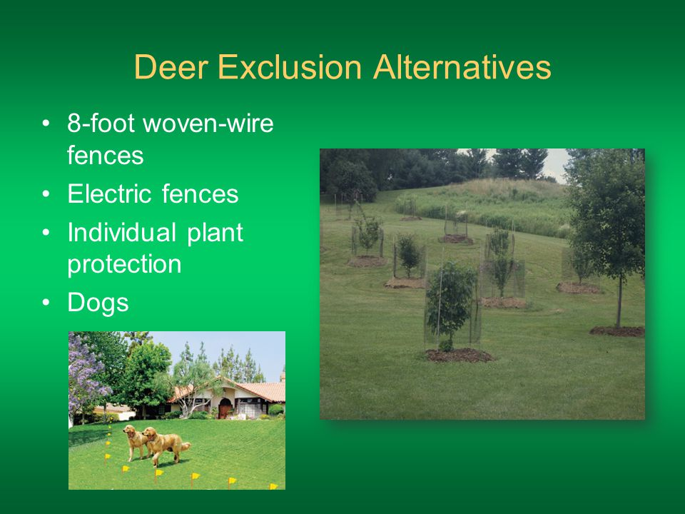 Deer Exclusion Alternatives 8-foot woven-wire fences Electric fences Individual plant protection Dogs